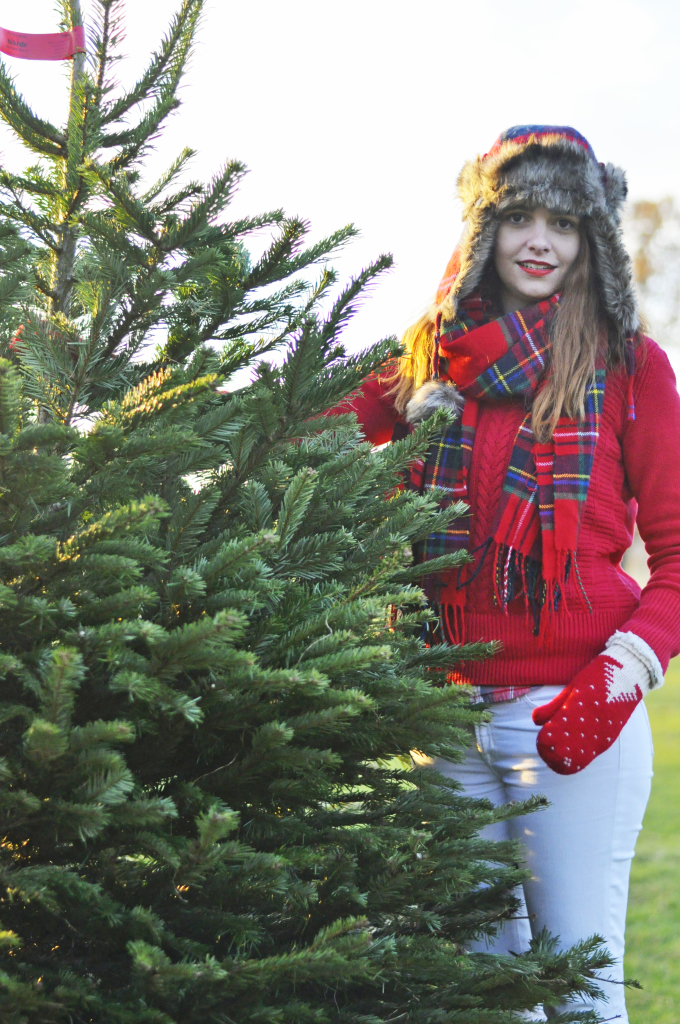 Christmas_tree_picking